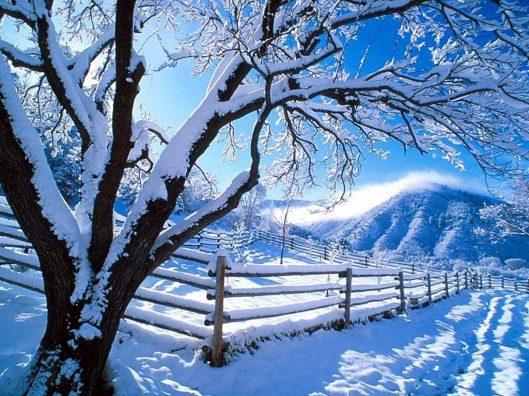 snow-2929